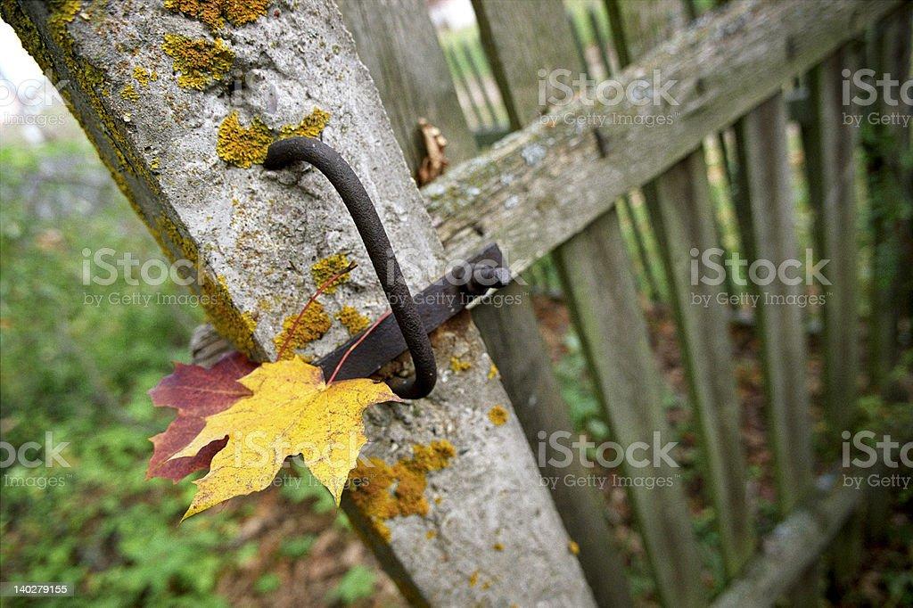 Two autumn maple leaf royalty-free stock photo
