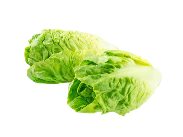 Two baby cos lettuce salad heads isolated on white Two baby cos lettuce salad heads isolated on white romaine lettuce stock pictures, royalty-free photos & images