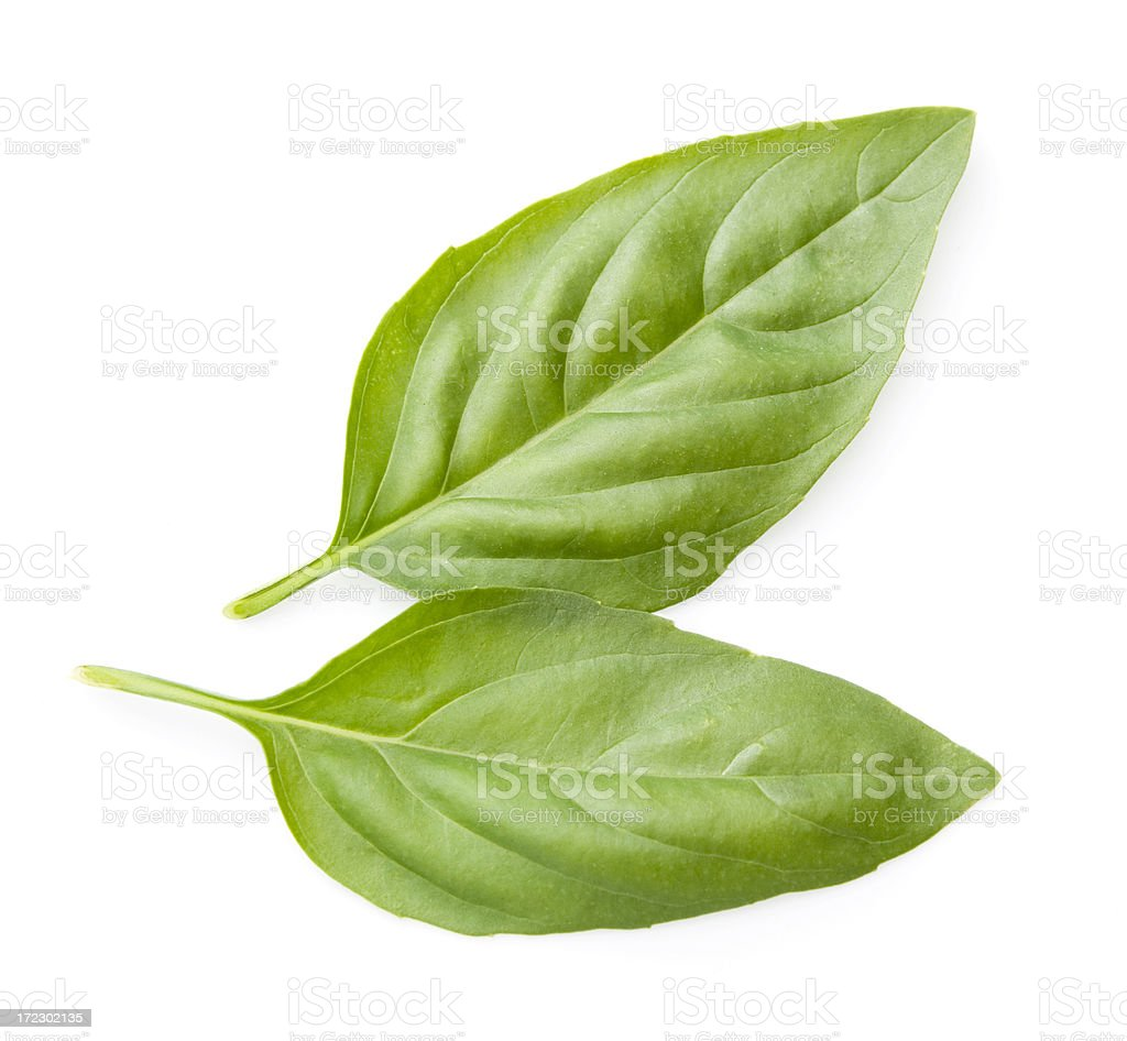 Two basil leaves royalty-free stock photo