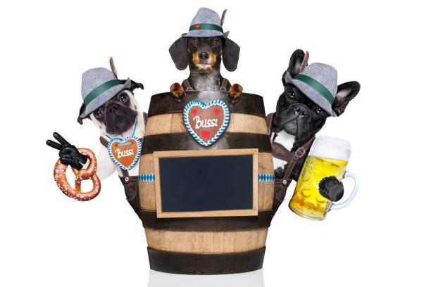 zwei bayerische hund - vintage dirndl stock-fotos und bilder