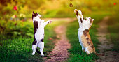 istock two beautiful cats walking in a Sunny summer garden and catch a flying swallowtail butterfly with their paws 1273739165
