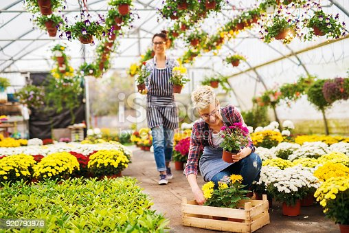 istock Two beautiful charming busy florist girls with eyeglasses working in the sunny greenhouse full of flowers and enjoying in their job. 920793976