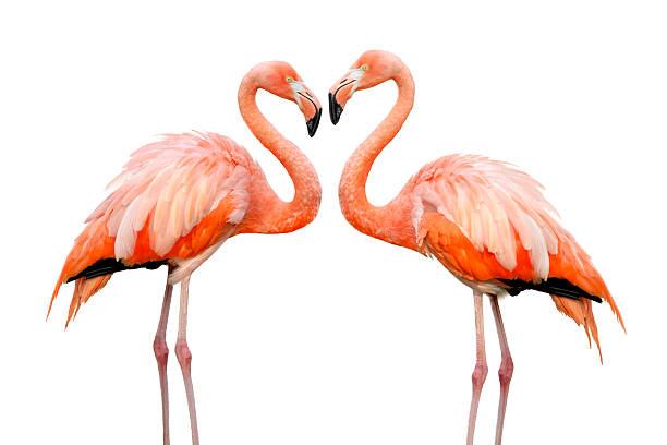 Deux flamants roses amoureux belle - Photo