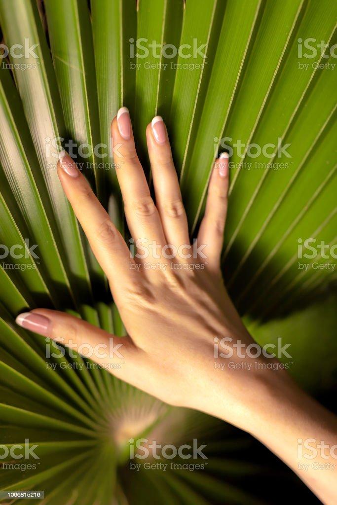 iki güzel formu, kadın el ve palmiye yaprağı stok fotoğrafı