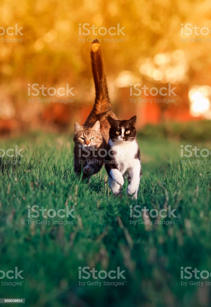 Les plus belles chattes des belles chattes
