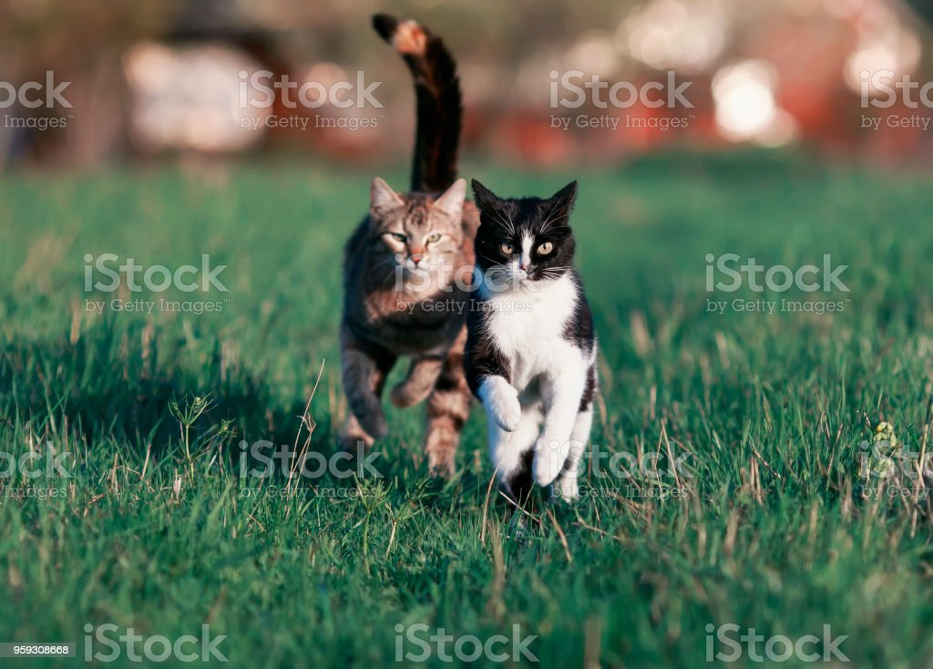 two beautiful funny cute cats are fun and fast to run a race through...