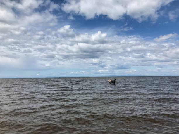 바다에서 나오는 두 개의 아름 다운 말 스톡 사진