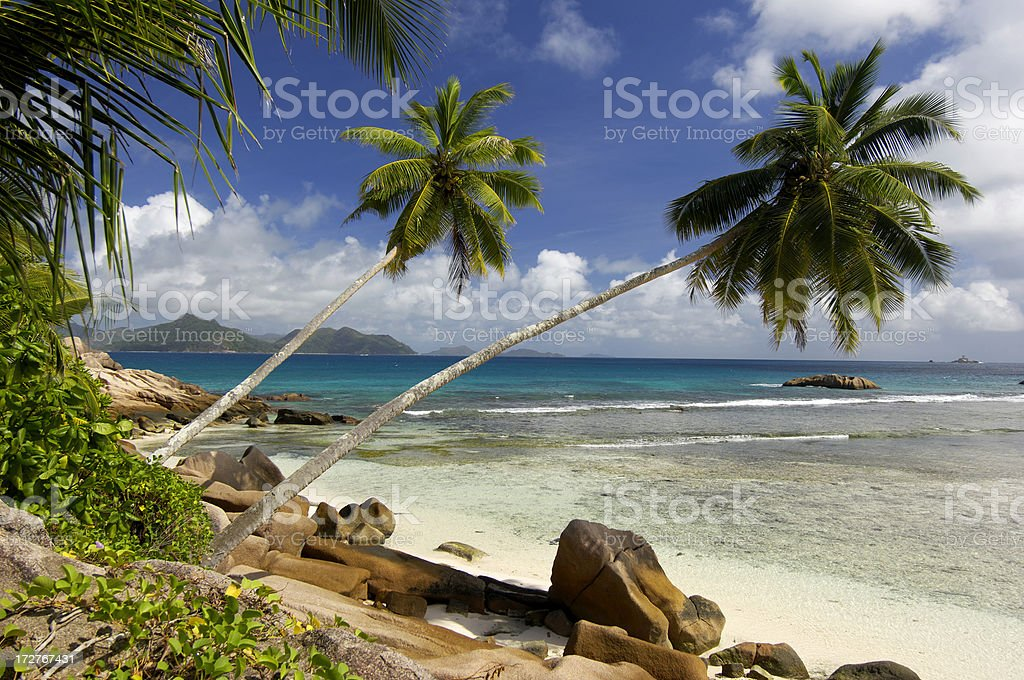 Two beautiful palmtrees at Anse Severe royalty-free stock photo