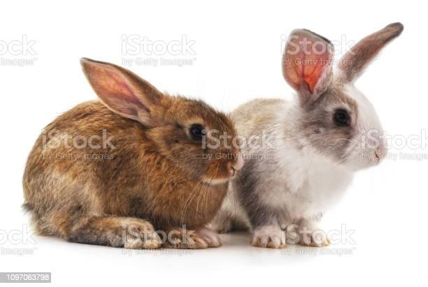 Two beautiful rabbits picture id1097063798?b=1&k=6&m=1097063798&s=612x612&h=e1zuph3may6yefkqnddzelec3vc6nluvui2ukprh9rm=