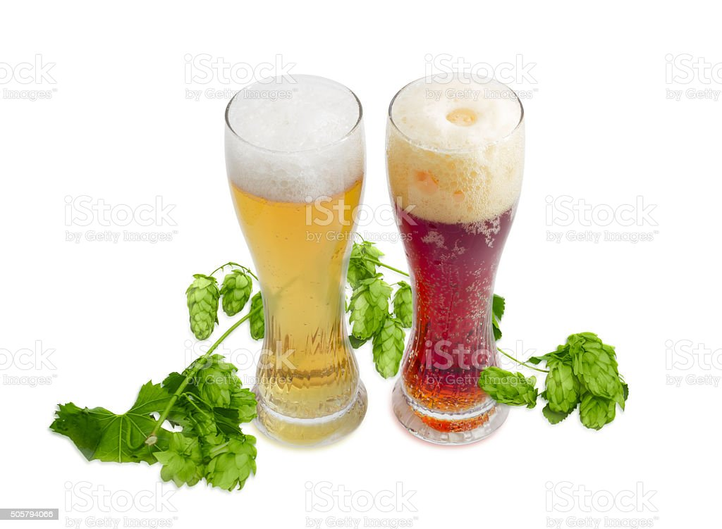 Two beer glass of various beer and branch of hops stock photo