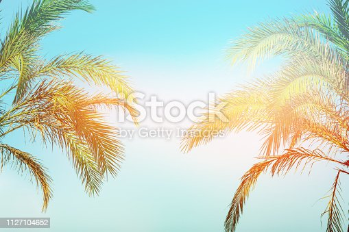 Two bending palm trees on toned vanilla pink peachy sky golden sun flare. Frame border composition. Tropical nature background. Beach vacation wanderlust