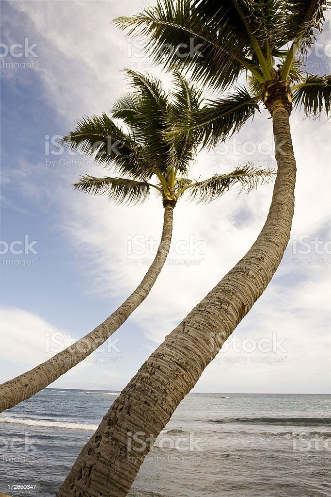 two bending palm trees stock photo