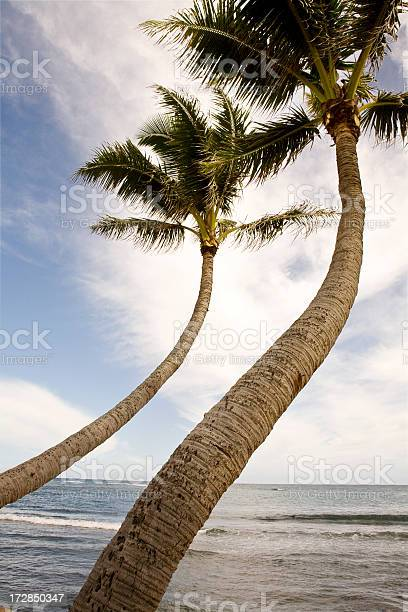 Photo of two bending palm trees