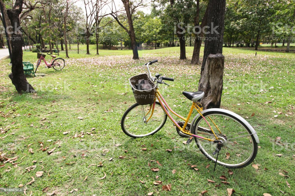 Two bicycles and trees in park, nature background , vacation time stock photo