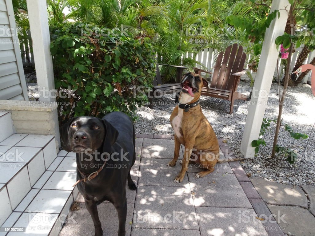 brown and black dog play in a quaint cottage yard