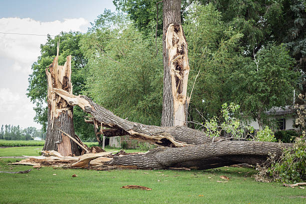 two big tree trunks broken by a severe storm horizontal image of a couple of very large tree trunks broken down by high winds and lightening due to thunder storm in the summer. snapping stock pictures, royalty-free photos & images