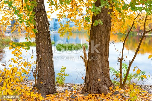istock Two big trees near blue lake 908038476