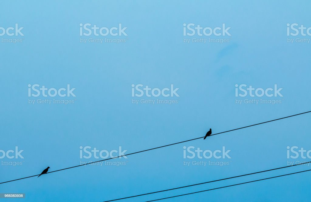 Two bird on electric cable with blue cloudy background stock photo