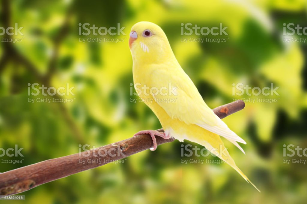 two birds are on a green background stock photo