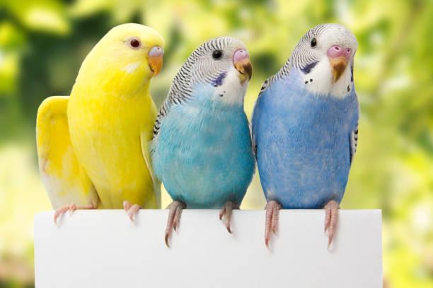 deux oiseaux sont sur fond vert - animaux familiers exotiques photos et images de collection