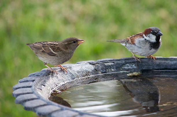 Two birds at a bath picture id187921182?b=1&k=6&m=187921182&s=612x612&w=0&h=cdxvvyjjompxxrybfnk5fwnssoywl2mgsioqamcbq28=