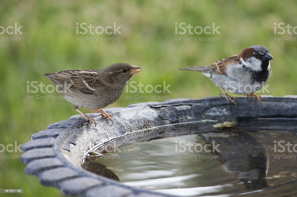 Two Birds at a Bath stock photo