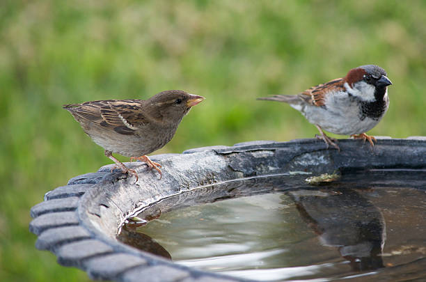 Two Birds at a Bath stock photo
