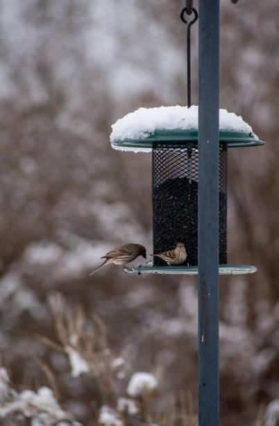 Two birds at a bird feeder in the snow stock photo