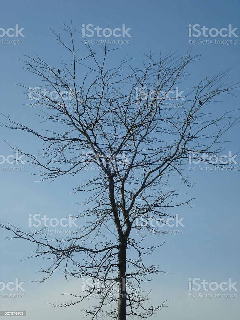 Two Birds in Bare Tree stock photo