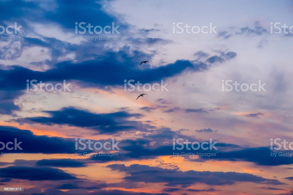 Two birds in purple sky royalty-free stock photo