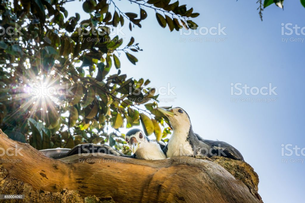 Two birds in sunlight stock photo