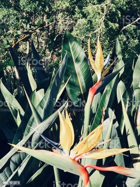 Две Райские Птицы — стоковые фотографии и другие картинки Африка