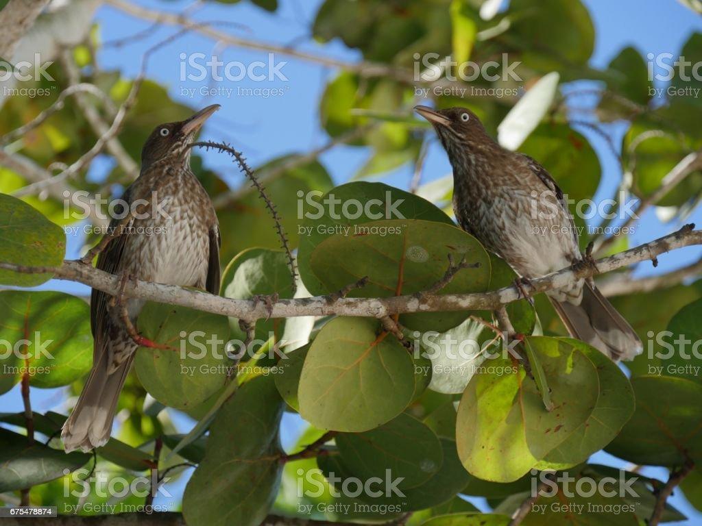 Deux oiseaux sur un arbre photo libre de droits