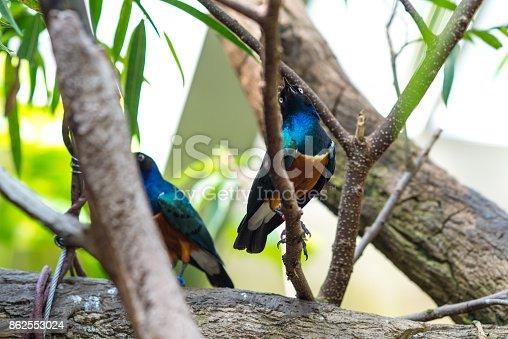 521620252istockphoto Two birds on tree 862553024