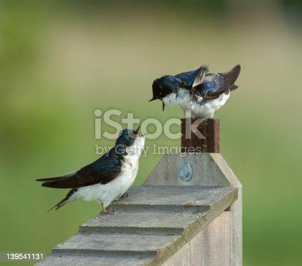 139975532 istock photo Two Birds 139541131