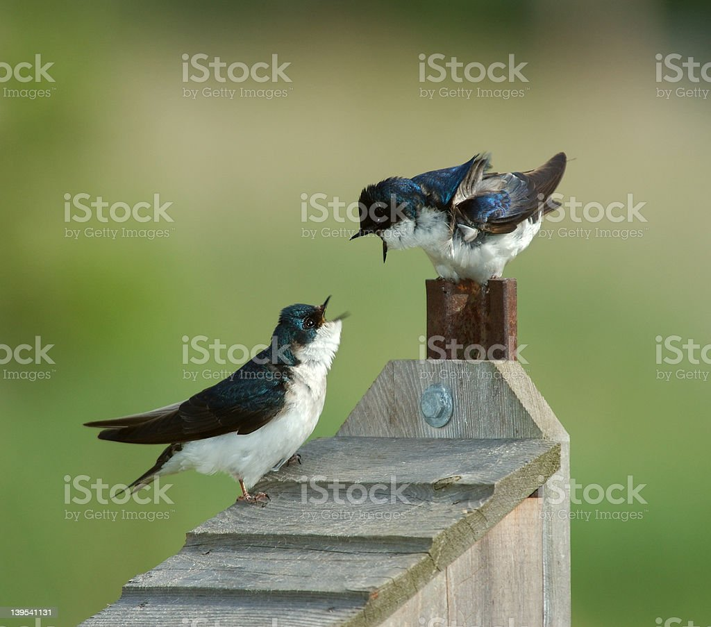 Two Birds stock photo