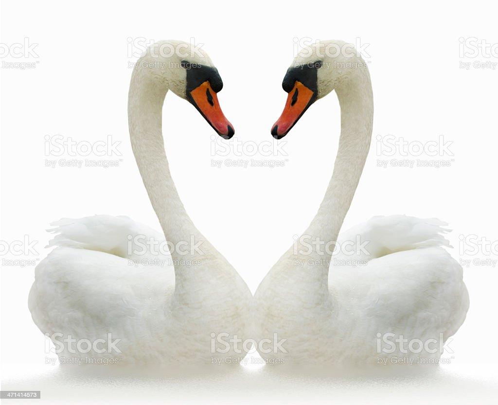Two birds. stock photo