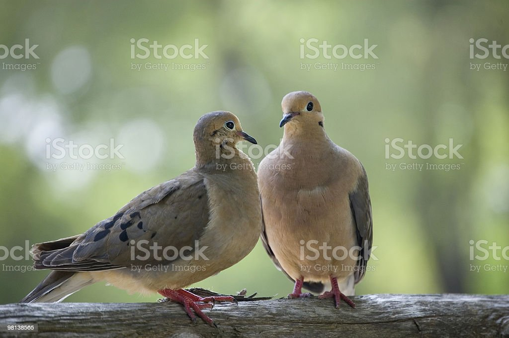 Due uccelli foto stock royalty-free