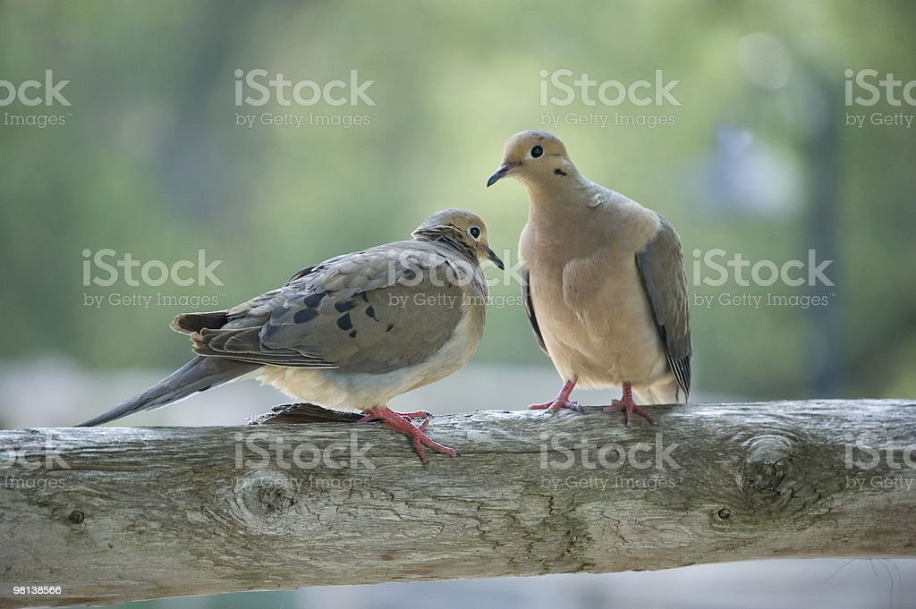 Two birds royalty-free stock photo