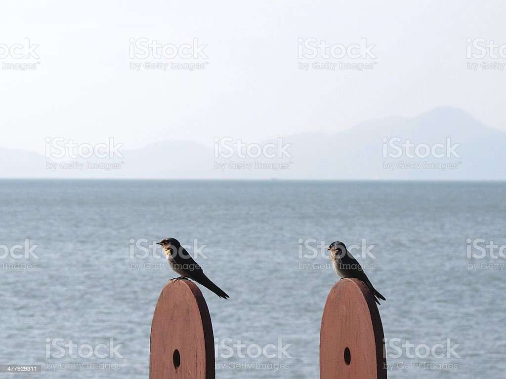 Two birds sitting on posts near sea stock photo