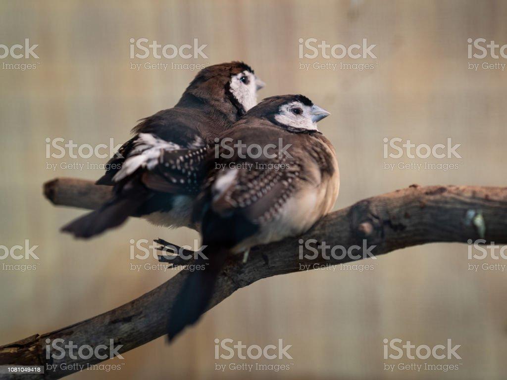 Two birds sitting on the tree branch. Animal, Bird, Love, Family...