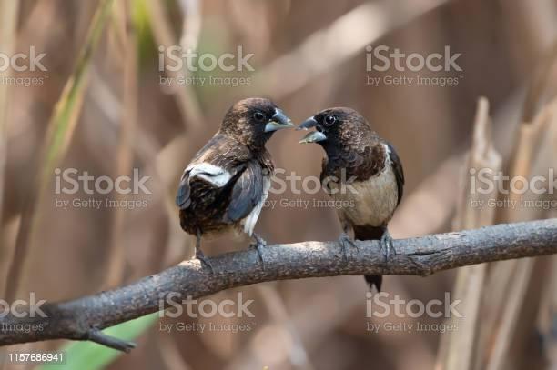 Two birds talking picture id1157686941?b=1&k=6&m=1157686941&s=612x612&h=qu7rcexlsv1rmrp0hienceiuygp8ufxvlvgb tahhhy=