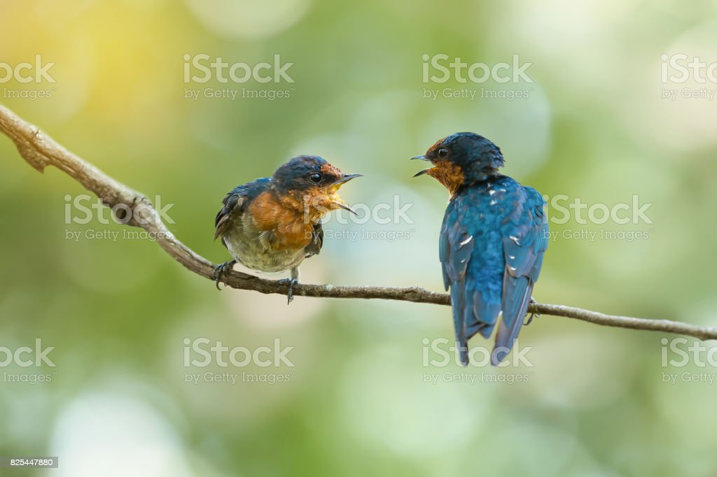Two birds talking stock photo