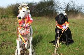 two funny decorated birthday dogs are sitting in the garden