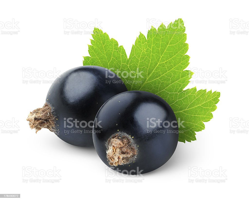Two black currants in a white background stock photo