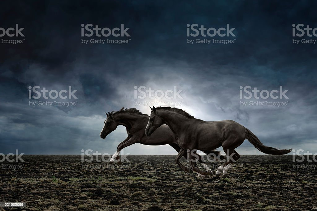 Dwa czarne konie – zdjęcie