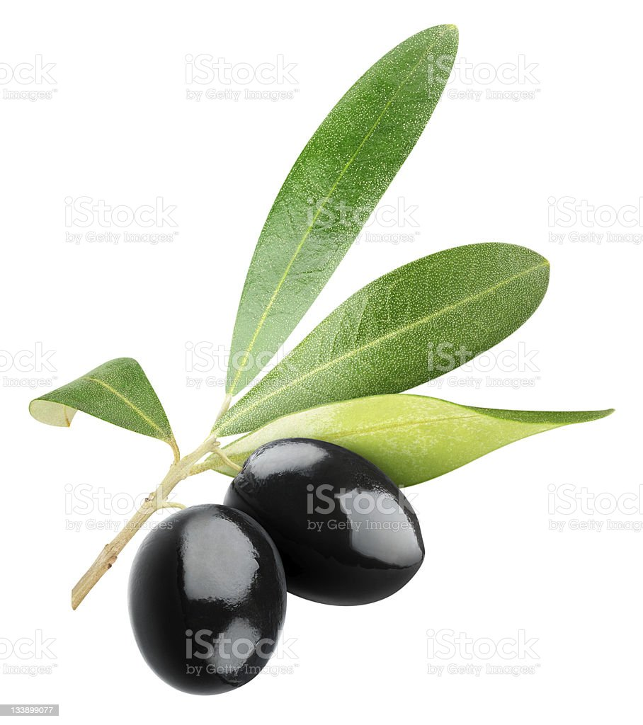Two black olives on branch with leaves over white background stock photo