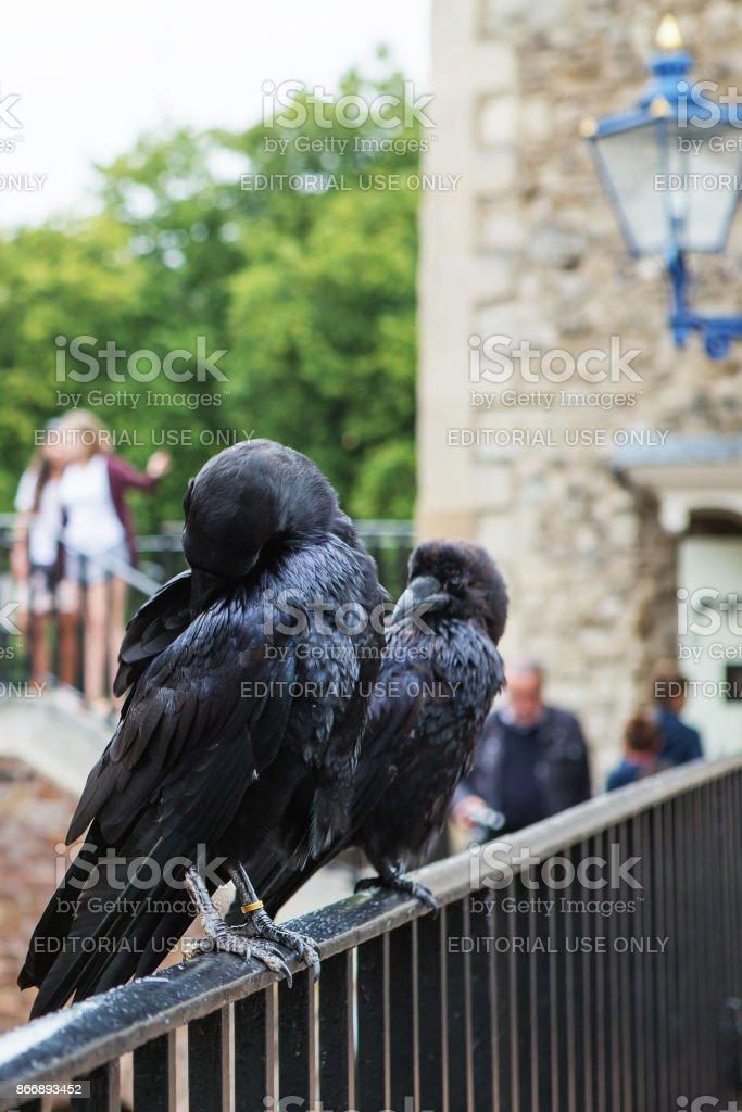 Fotografía de Dos Cuervos Negros En La Torre De Londres Reino Unido ...