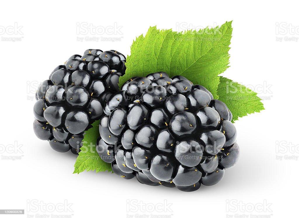 Two blackberries on white background royalty-free stock photo
