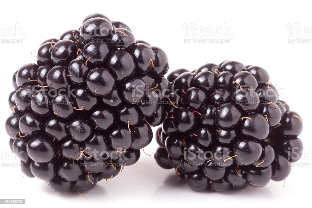 two blackberry isolated on a white background closeup stock photo